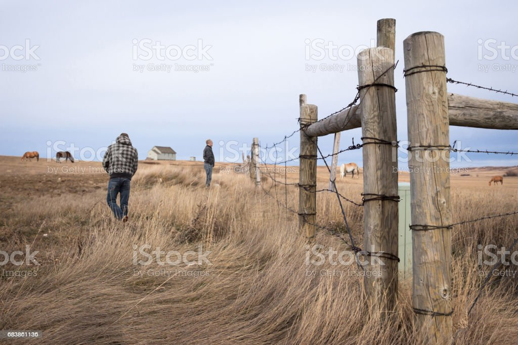 father and son in the pasture with horses. stock photo