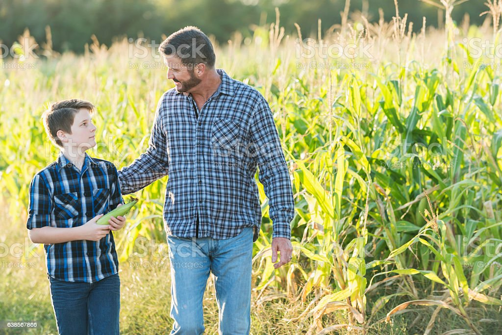 Father and son on family farm walkng by corn field stock photo