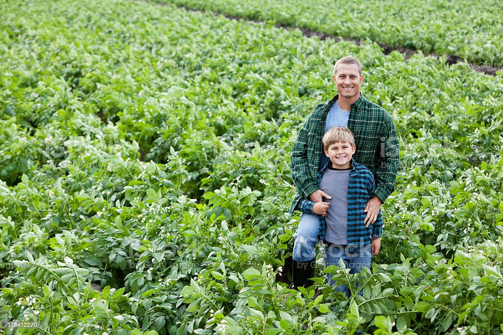 Father and son standing in field of potato crops stock photo