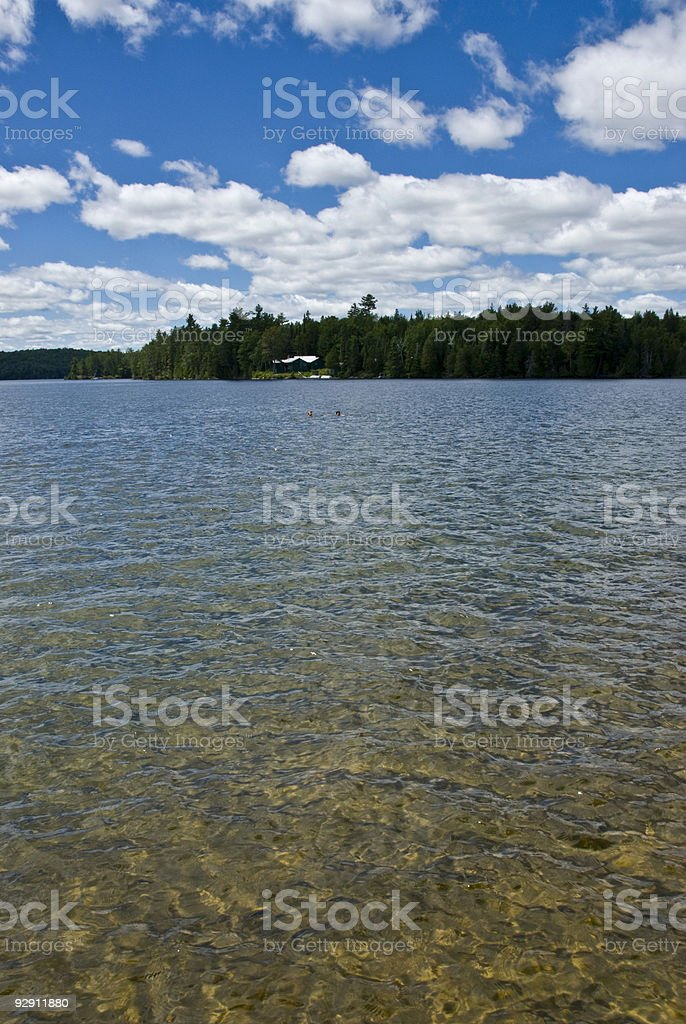 Father and Son Swimming in a Summer Lake stock photo