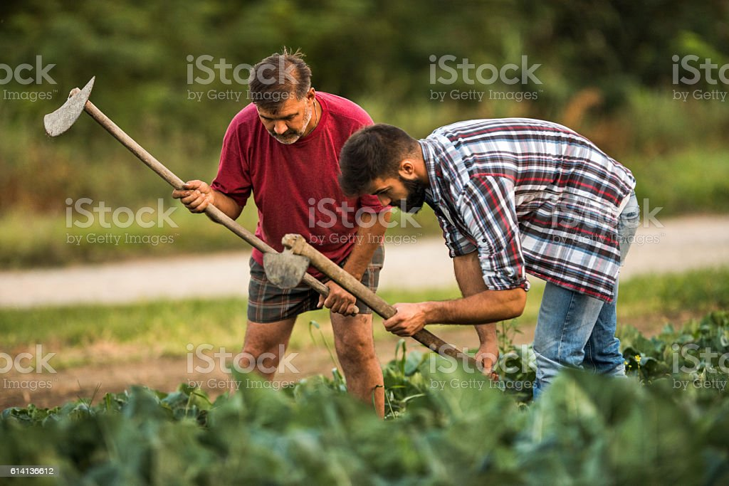Father and son using garden hoe on a field. stock photo