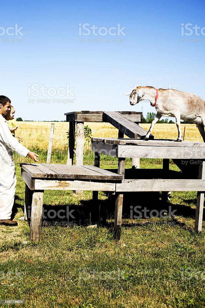 Father and son with goat royalty-free stock photo