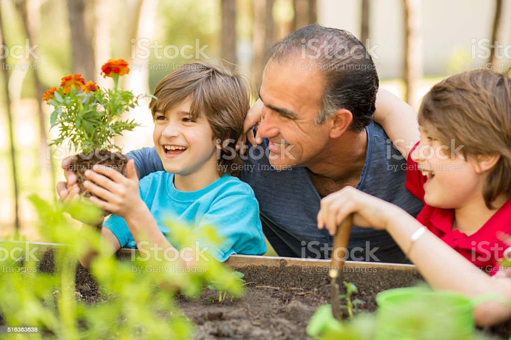 Father and sons enjoy gardening in backyard. Homegrown organic vegetables. stock photo