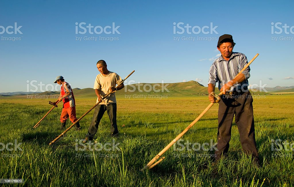 Father and Son's Using traditional farming methods stock photo