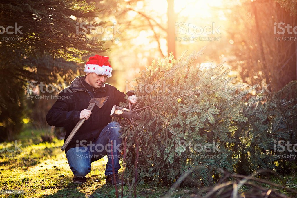 Father wearing santa hat cutting down tree for christmas. stock photo