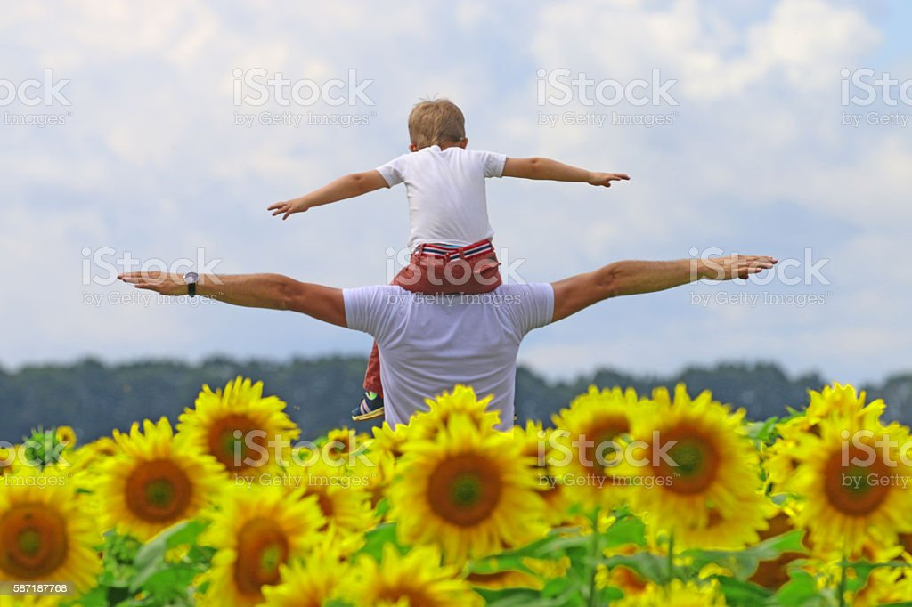 father with baby in field of blooming sunflowers, stock photo