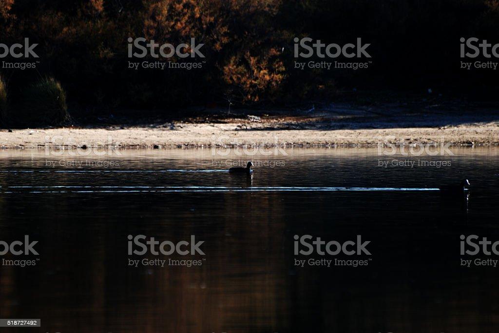 Fauna acquatica stock photo
