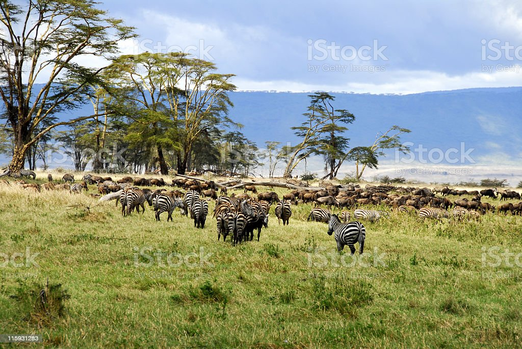 Fauna and flora in the Ngorongoro Crater stock photo