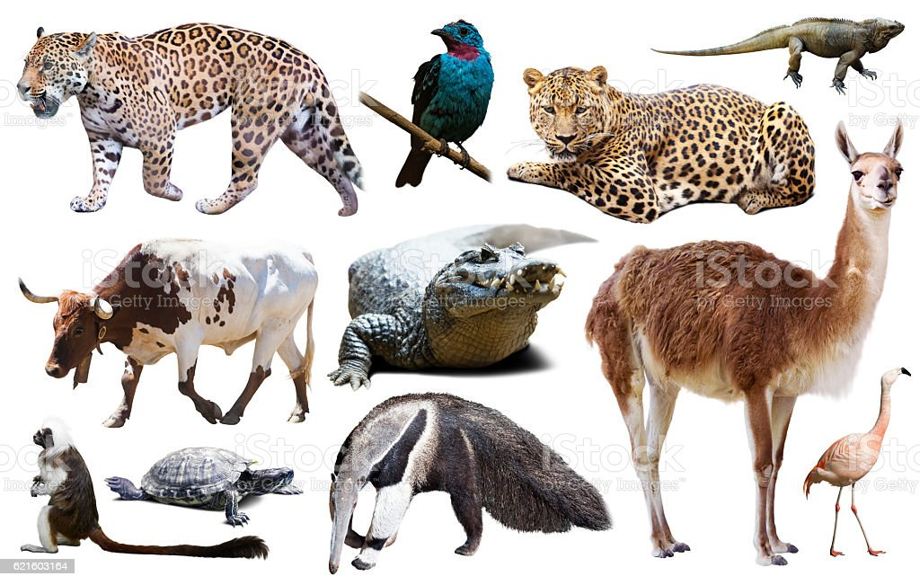 Fauna of South America set stock photo