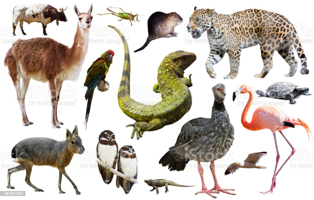 Fauna of South America set stock photo