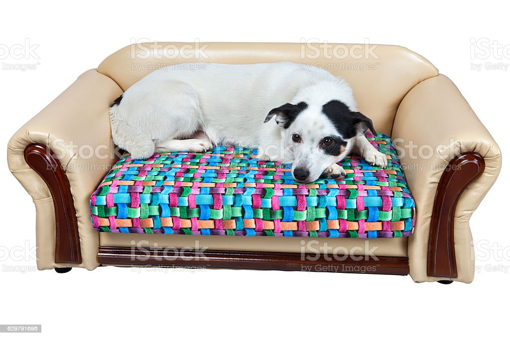 Faux leather sofa for dogs, isolated on white. stock photo