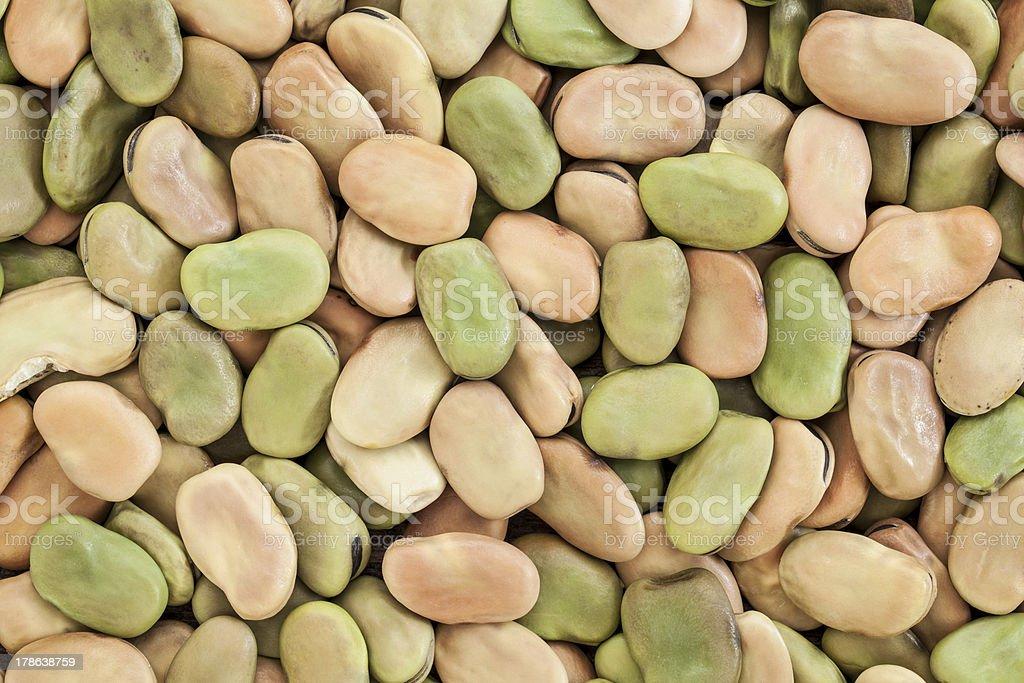 fava (broad) bean stock photo
