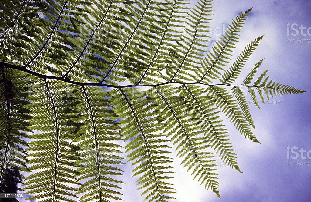 Fearn leaf royalty-free stock photo