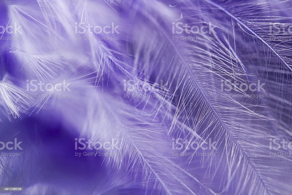 Feather abstract stock photo