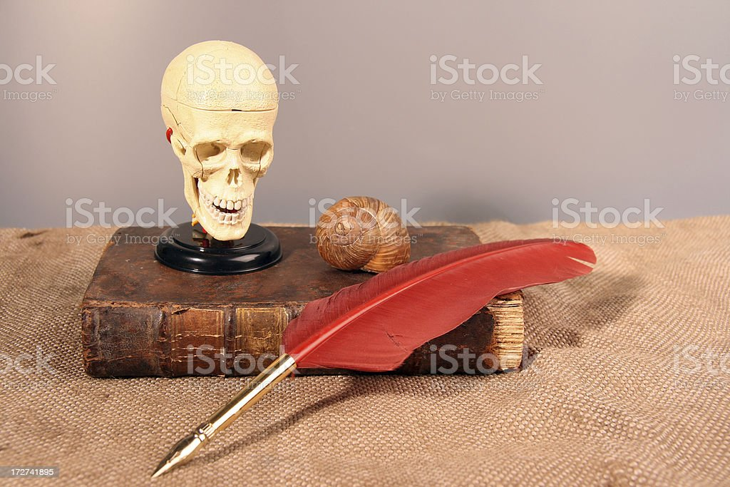 Feather and skull stock photo