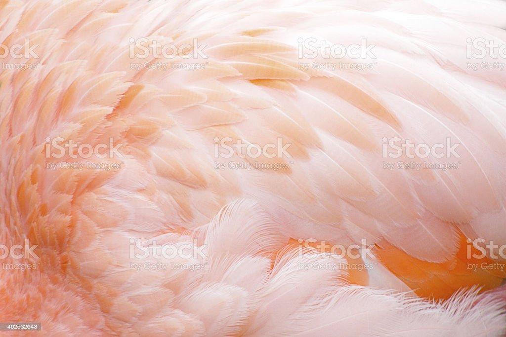 Feather backgroun stock photo