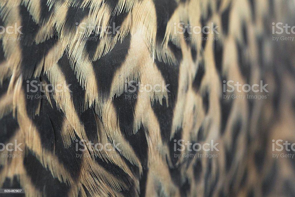 Feather Background - Falcon Bird of Prey stock photo