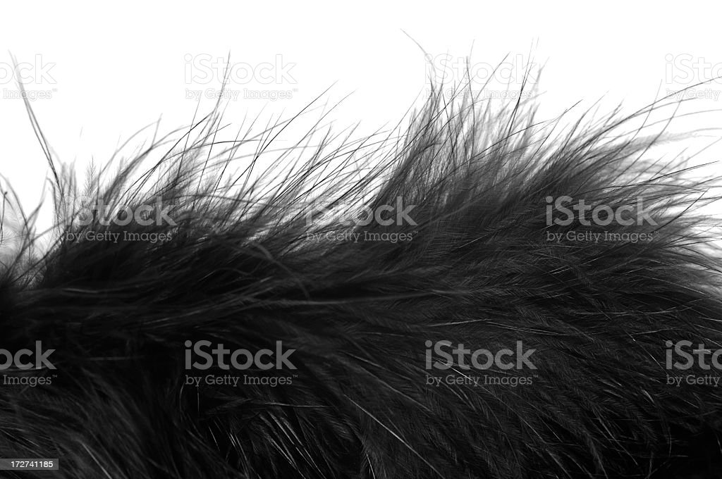 Feather boa stock photo