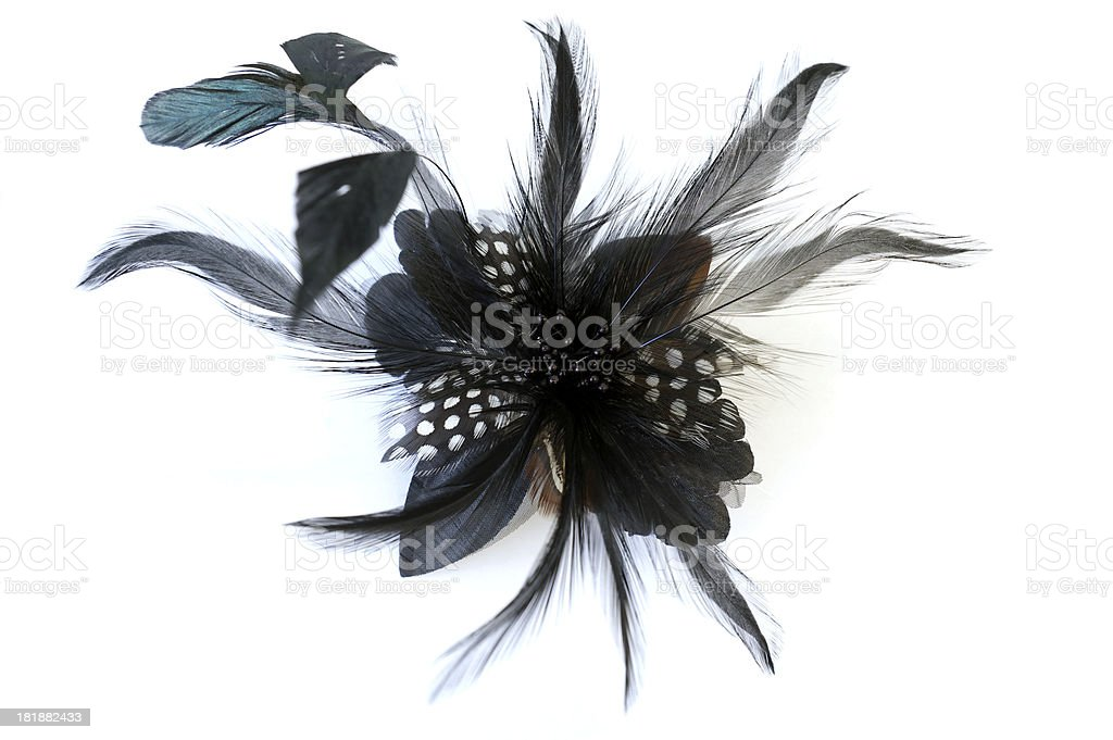Feather brooch stock photo