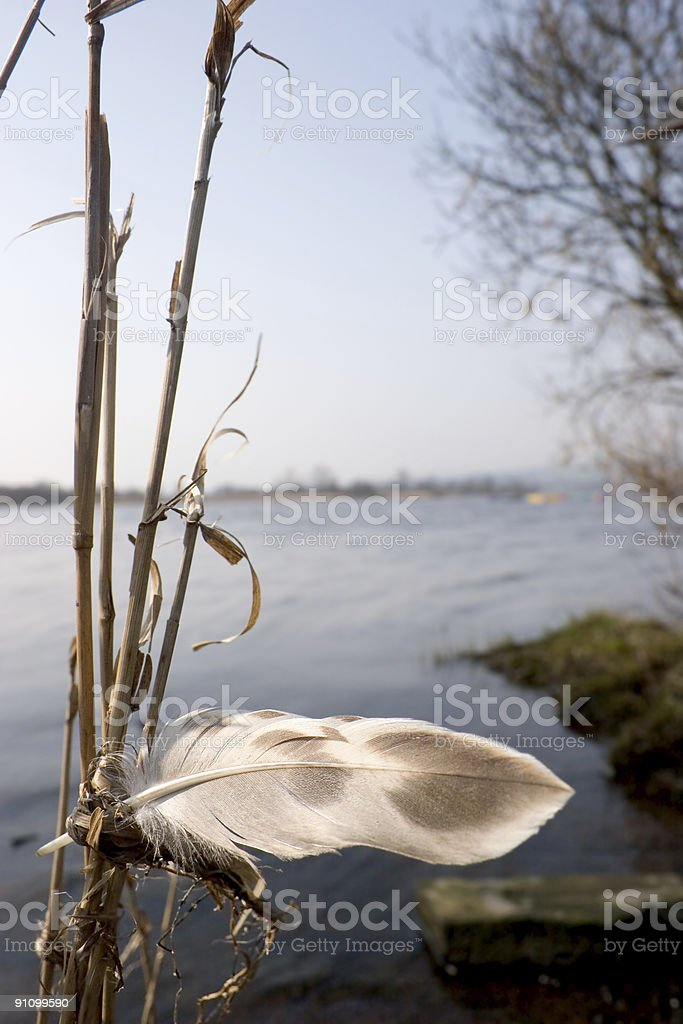 Feather by a Loch royalty-free stock photo