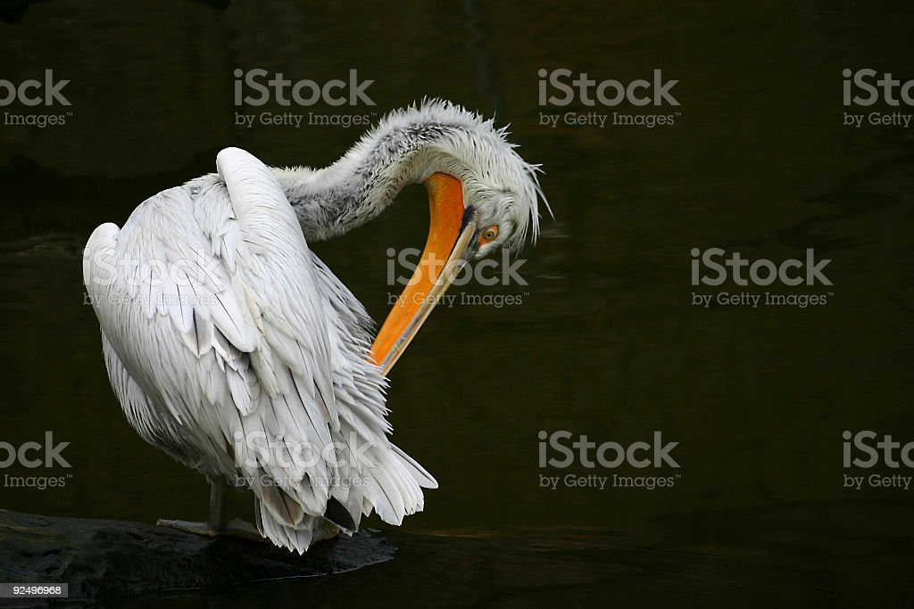 Feather cleaning stock photo