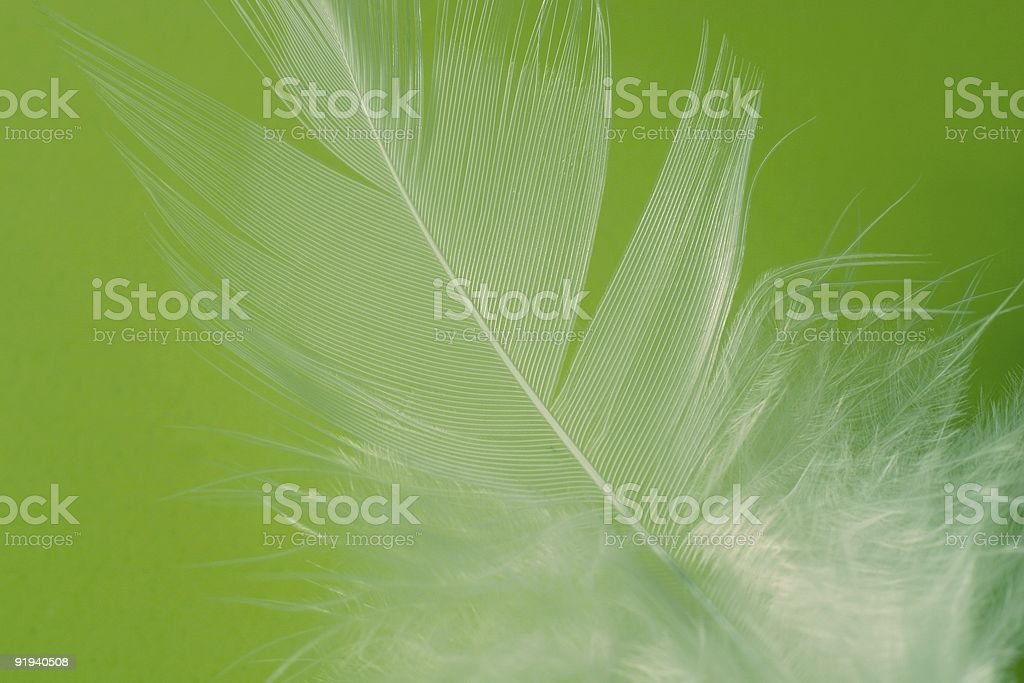 Feather detail stock photo