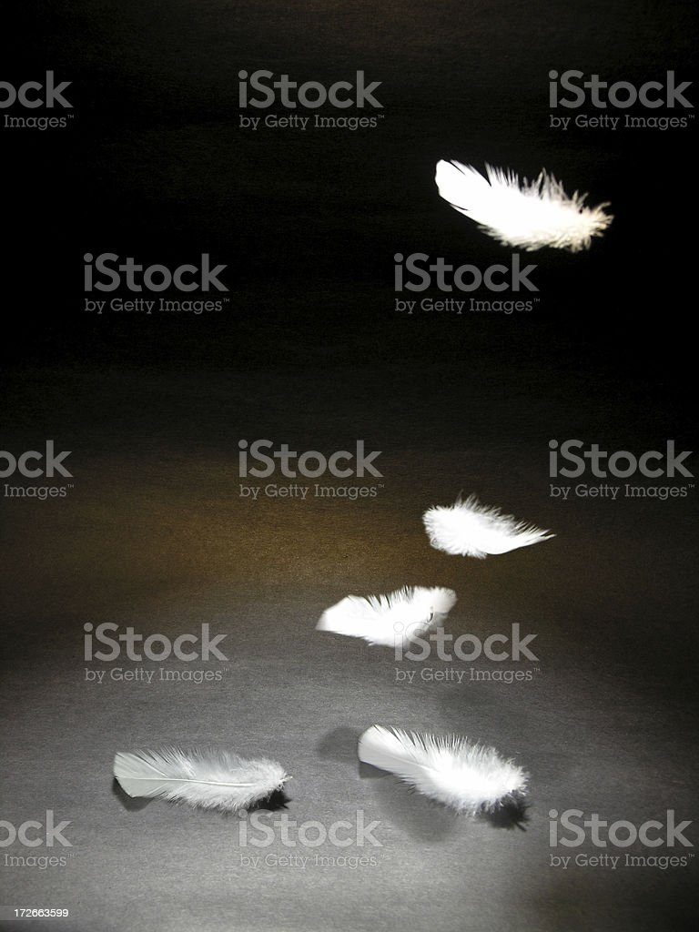 Feather Drop royalty-free stock photo