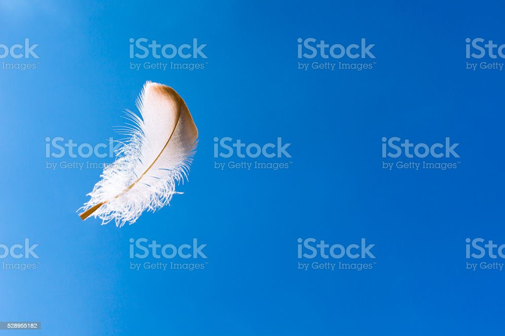 Feather in the sky stock photo