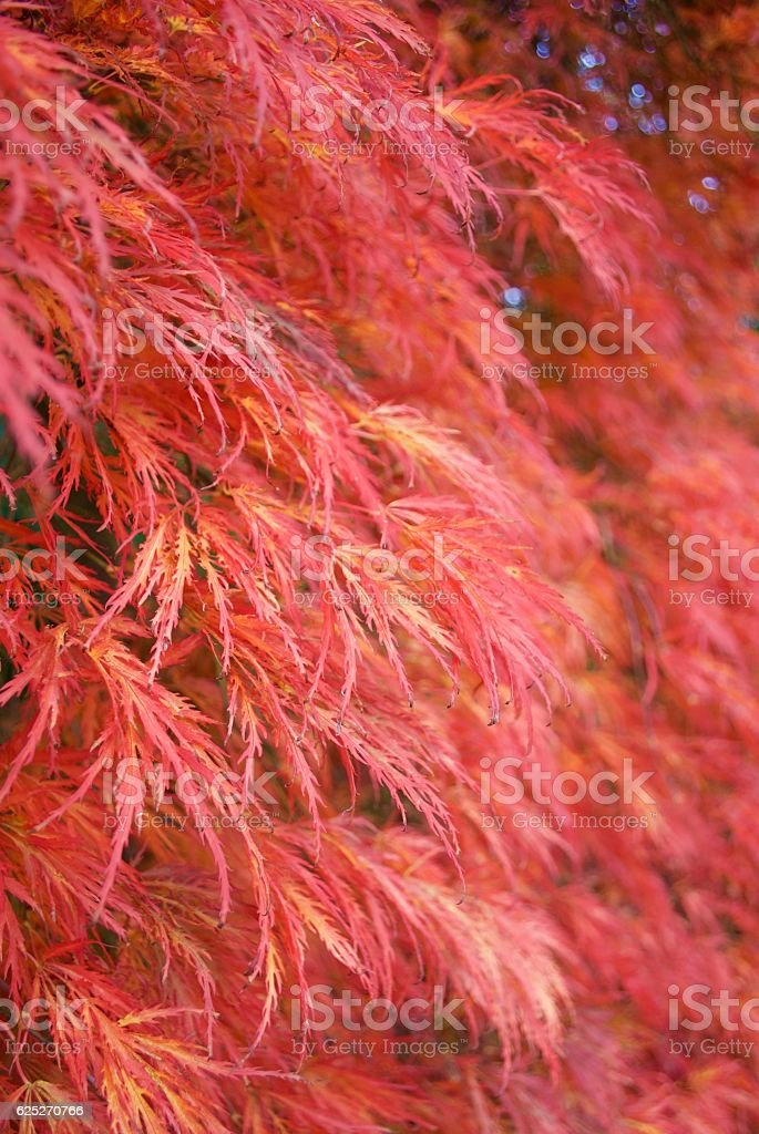 Feather Leaves stock photo