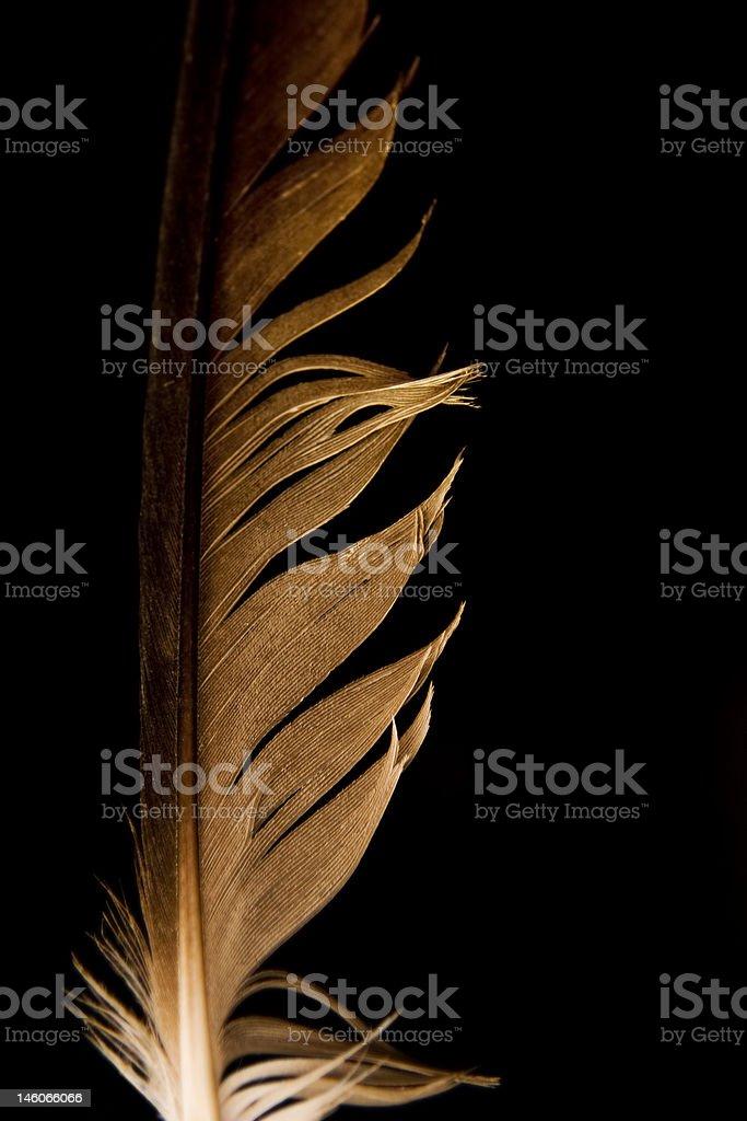 Feather macro stock photo