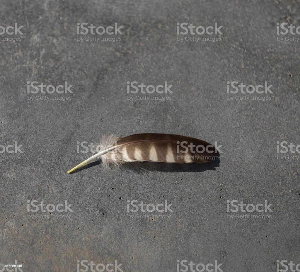 feather of a bird stock photo