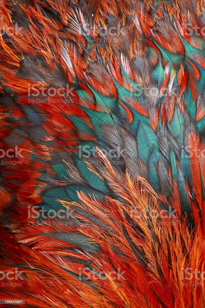 feather  of  bird royalty-free stock photo