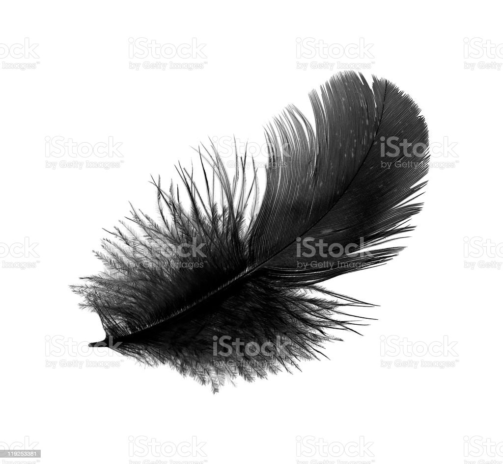 Feather of the black bird royalty-free stock photo