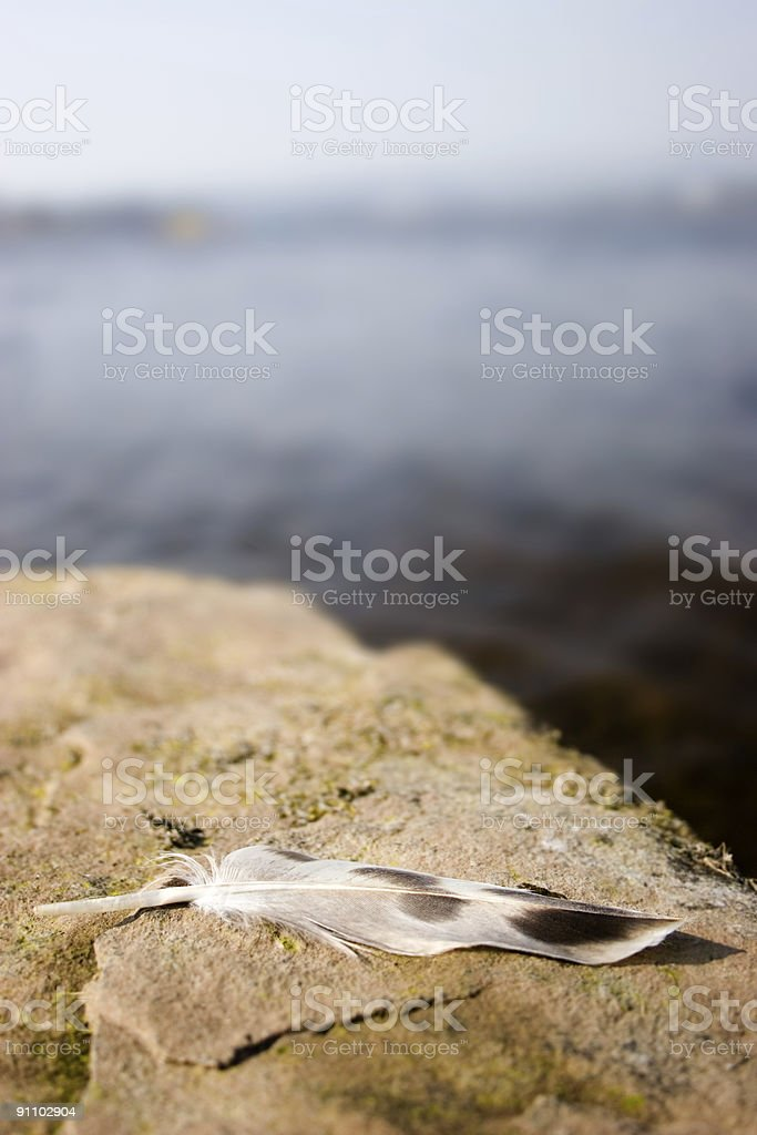 Feather on a Loch Shore royalty-free stock photo