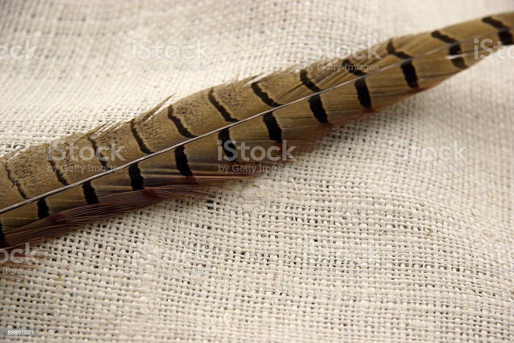 feather on burlap royalty-free stock photo