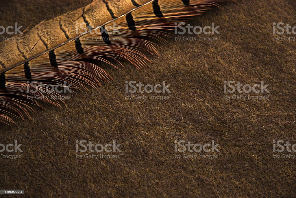 feather on felt background stock photo