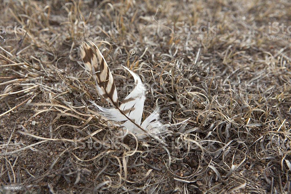 Feather on Sand Creek Massacre National Historic Site, Colorado stock photo