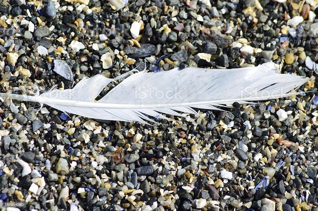 Plume sur la Shell Beach photo libre de droits