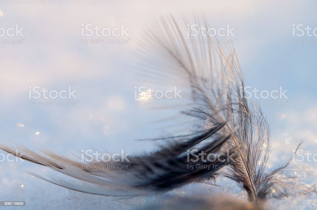 Feather on the shining sun close isolated stock photo