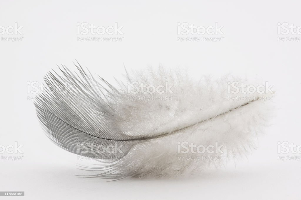 Feather on white background royalty-free stock photo