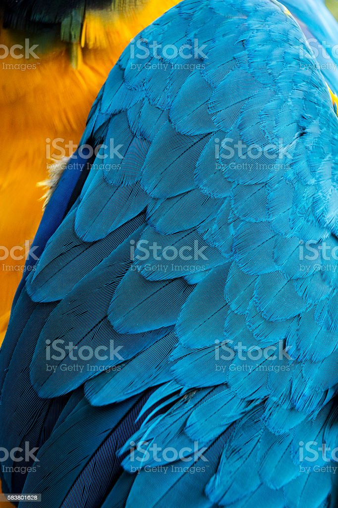 Feather on wing and body of macaw parrot stock photo