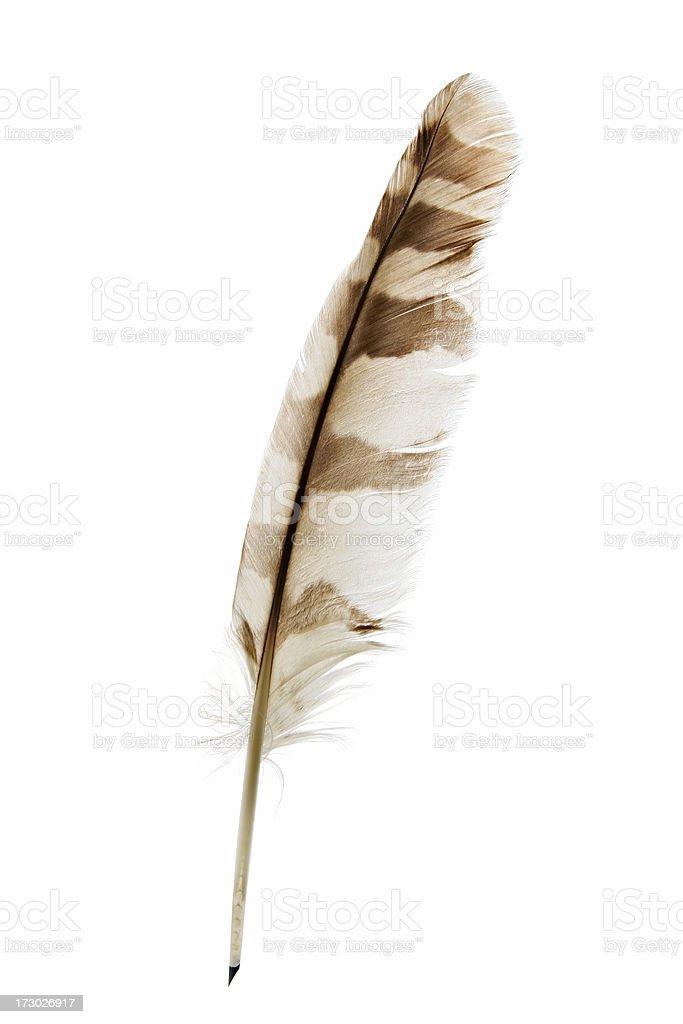 Feather pen on white royalty-free stock photo