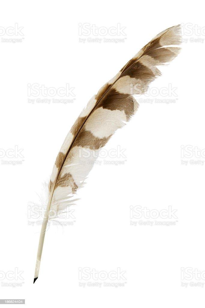 Feather pen on white stock photo