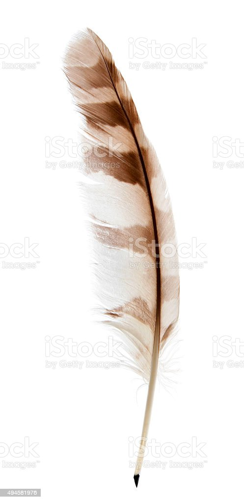 Feather pen on white stock photo