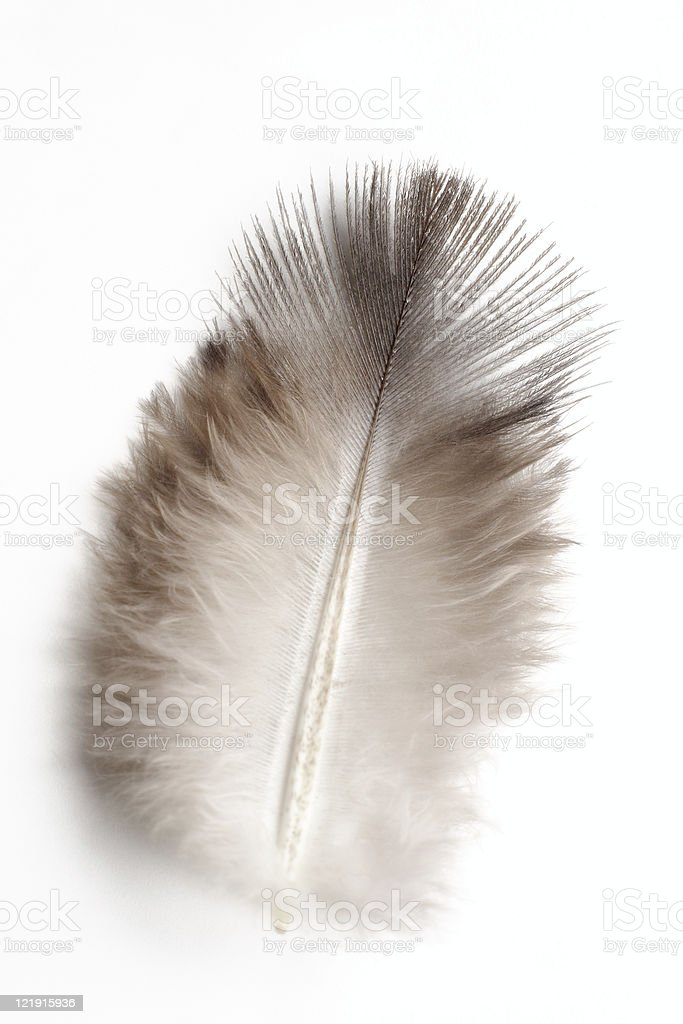 Feather royalty-free stock photo