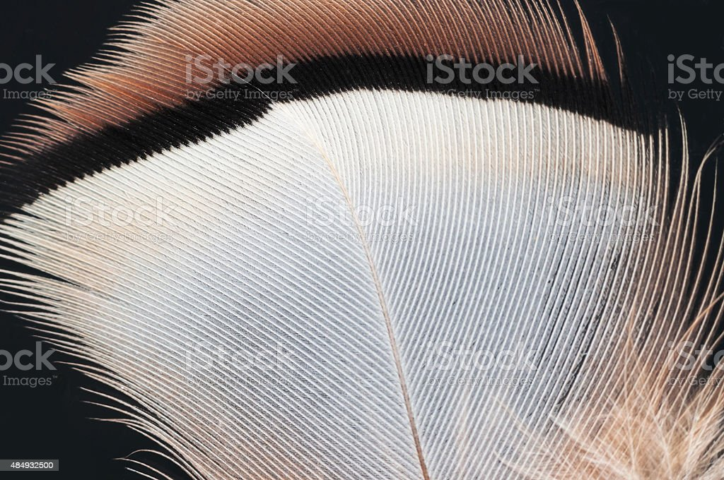 Feather stock photo
