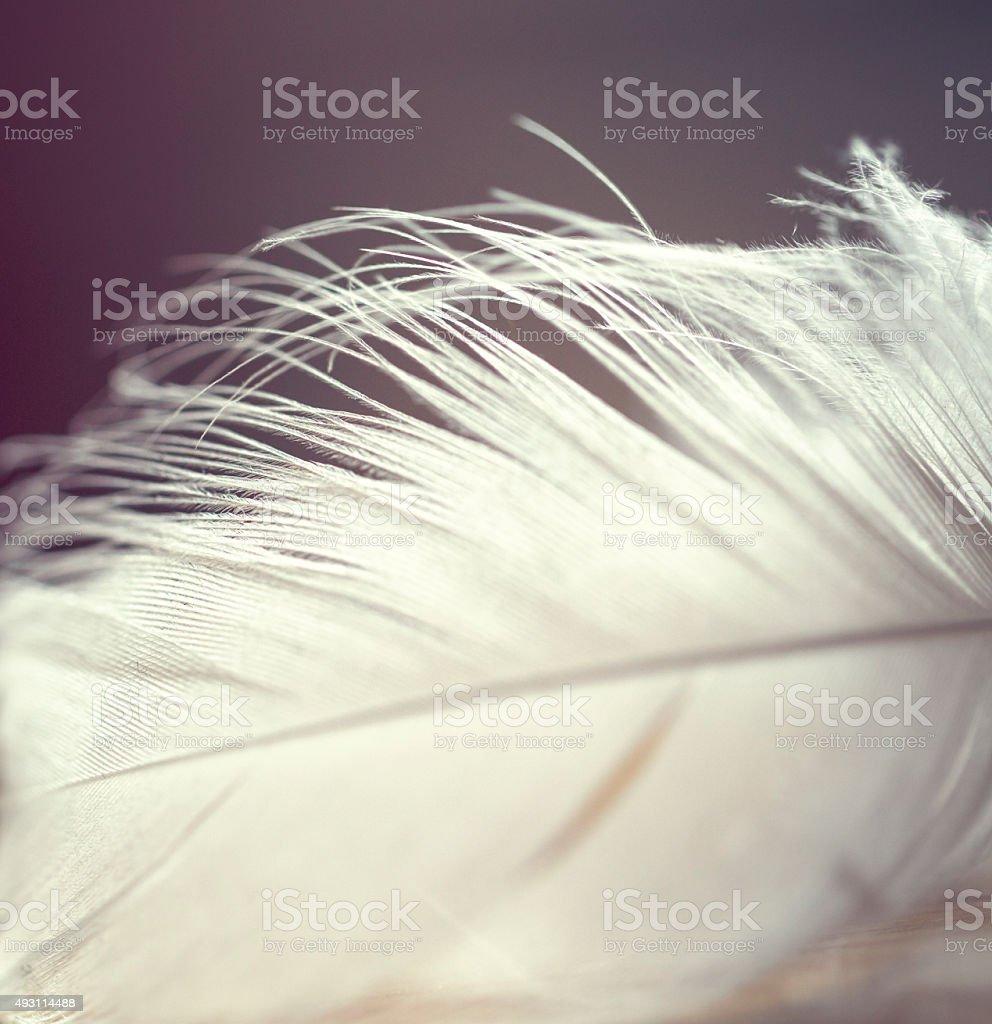 Feather stock photo