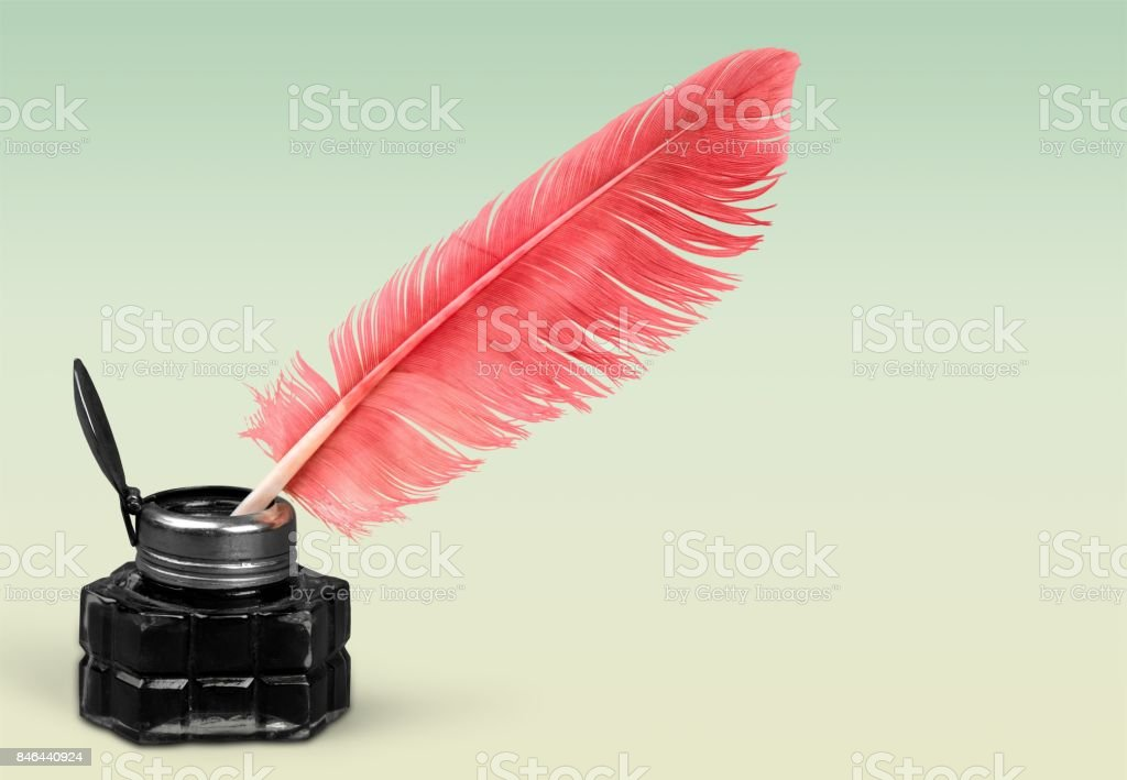 Feather. stock photo