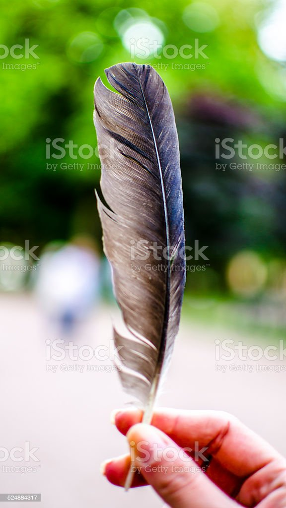 Feather / Quill Pen stock photo