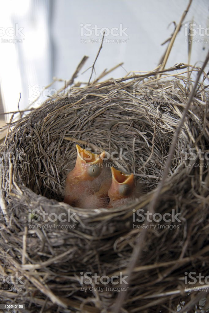 Feather the nest royalty-free stock photo